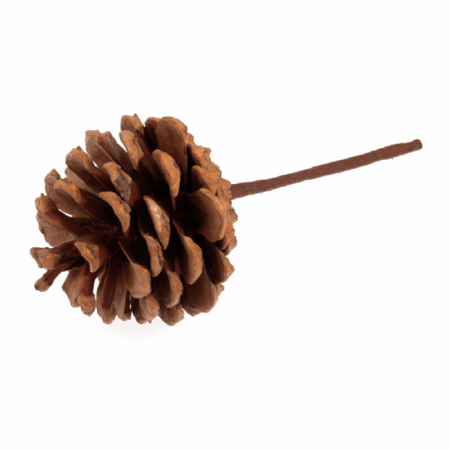Pick Pinecone Natural 12 x 1 Stick